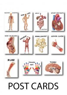 Postcard Anatomy 3-Set