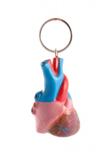 Key Chain Human Heart